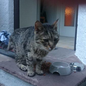 Unterberg: Katze zugelaufen