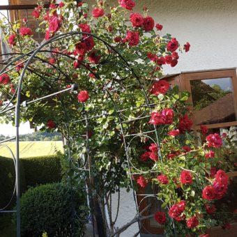 Wohnungssuche: Gartenliebhaberin sucht neue Bleibe