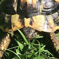 Schildkröte entlaufen!