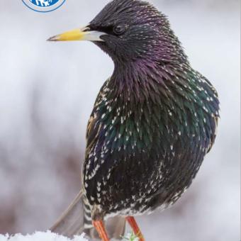 Letzter Tag! Wintervögel zählen!