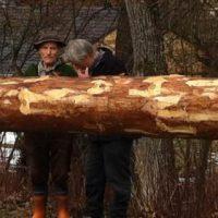 Um die Ecke gefahren: der neue Farchner Maibaum