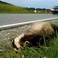 Tod auf der Staatsstraße