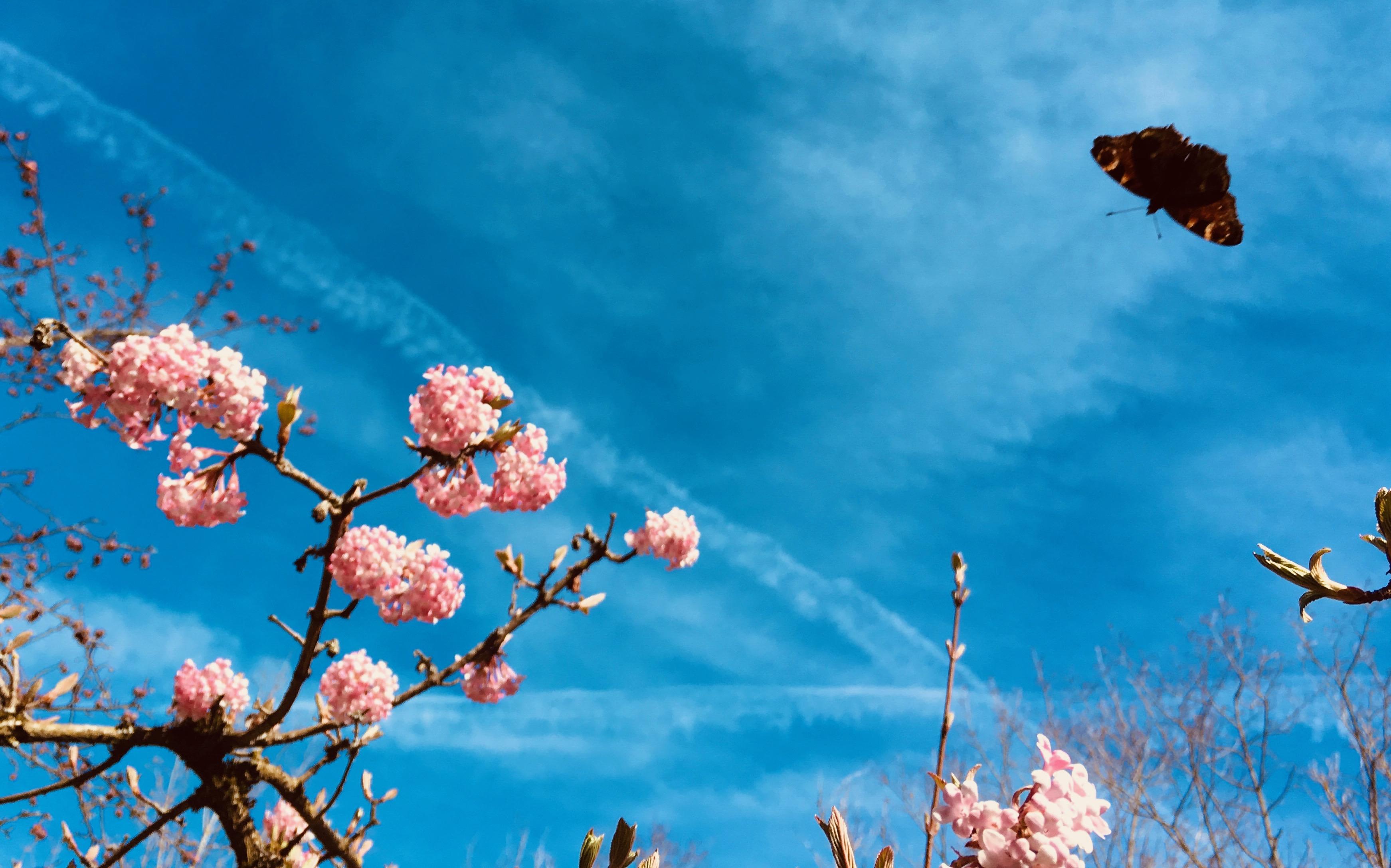 Wildblumen Und Bluhwiesen Was Kann Ich Tun Quh