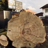 Der Baum ist tot