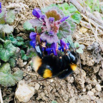 Wildblumen und Blühwiesen – was kann ich tun?