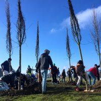 Ein großer Tag: Gemeinsame Pflanzaktion im Containerdorf