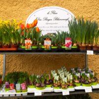 Neueröffnung: Le Fleur - das Berger Blumencafé