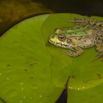 Vortrag: Die faszinierende Welt der Amphibien