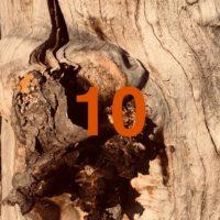 Der QUH-Adventskalender: das 10. Bäumchen