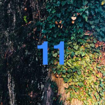Der QUH-Adventskalender: das 11. Bäumchen