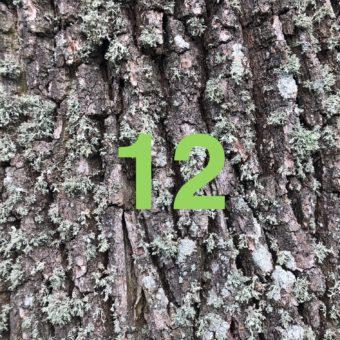 Der QUH-Adventskalender: das 12. Bäumchen