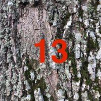 Der QUH-Adventskalender: das 13. Bäumchen
