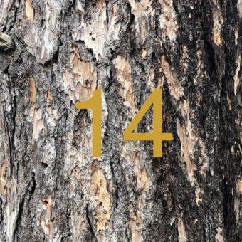 Der QUH-Adventskalender: das 14. Bäumchen