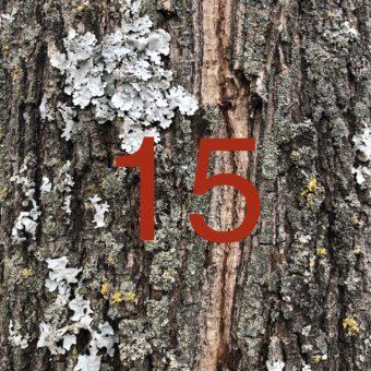 Der QUH-Adventskalender: das 15. Bäumchen
