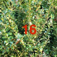 Der QUH-Adventskalender: das 16. Bäumchen