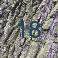 Der QUH-Adventskalender: das 18. Bäumchen
