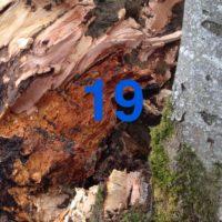 Der QUH-Adventskalender: Das 19. Bäumchen