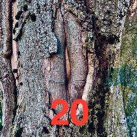 Der QUH-Adventskalender: das 20. Bäumchen