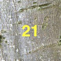 Der QUH-Adventskalender: das 21. Bäumchen