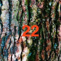 Der QUH-Adventskalender: das 22. Bäumchen