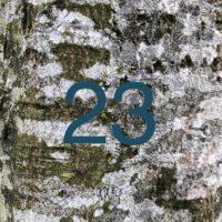 Der QUH-Adventskalender: das 23. Bäumchen