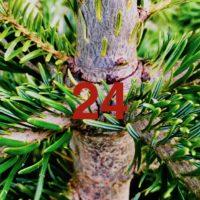 Der QUH-Adventskalender: das 24. Bäumchen