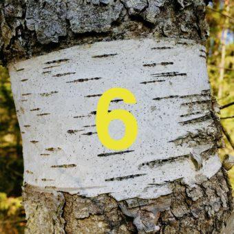 Der QUH-Adventskalender: das 6. Bäumchen