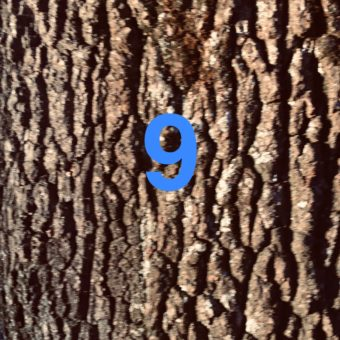Der QUH-Adventskalender: das 9. Bäumchen