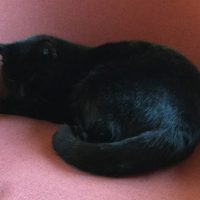 Katze Blacky wird vermisst