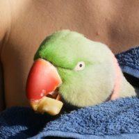 Tiere in Berg, Folge 2: Papagei gefunden - Halter gesucht!